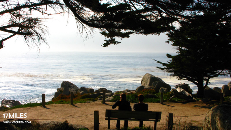 17 mile drive the lone cypress monterey for 17 mile drive celebrity homes